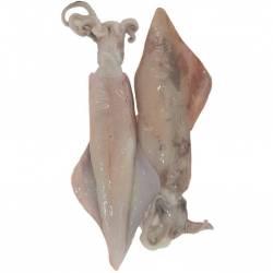 Calamar salvaje fresco