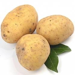 Patatas Nuevas del Terreno