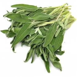 Salvia Manojo